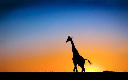 Free Giraffe Silhouette