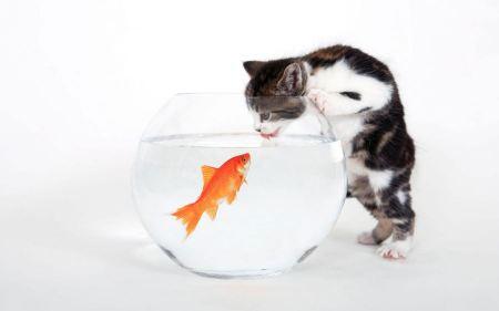 Free Kitten Licking from Fish Bowl