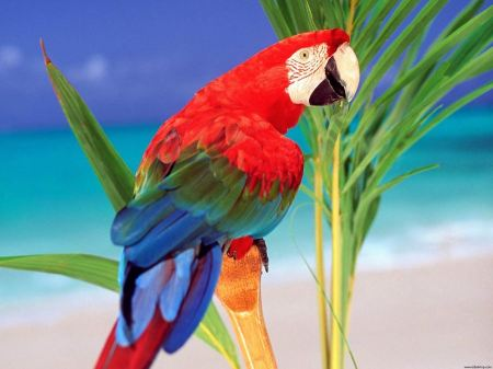Free Tropical Colored Parrot