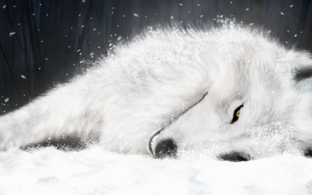 Free Snowy White Fox