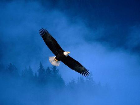 Free Majestic Flying Eagle