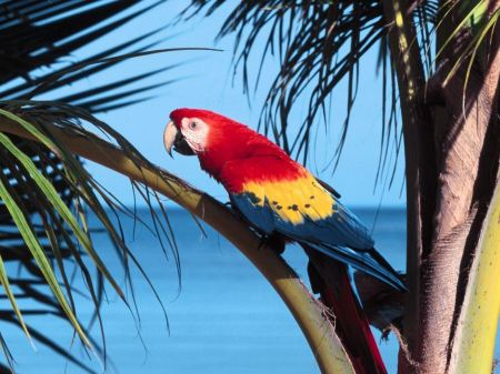 Free Parrot on the Beach