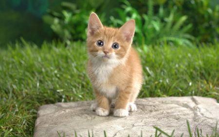 Free Curious Tabby Kitten