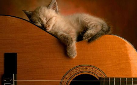 Free Kittykat Sleeping on Guitar