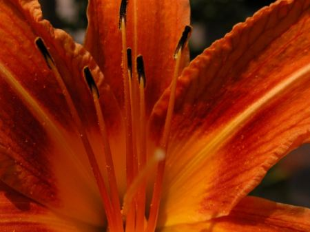 Free Close Up of Bright Orange Flowear