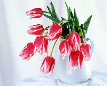 Free Red Flowers in Vase