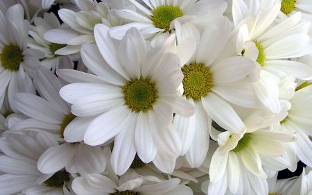 Free White Lilies